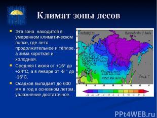 Климат зоны лесов Эта зона находится в умеренном климатическом поясе, где лето п