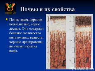 Почвы и их свойства Почвы здесь дерново- подзолистые, серые лесные. Они содержат