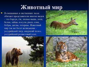 Животный мир В смешанных и лиственных лесах обитают представители многих видов –