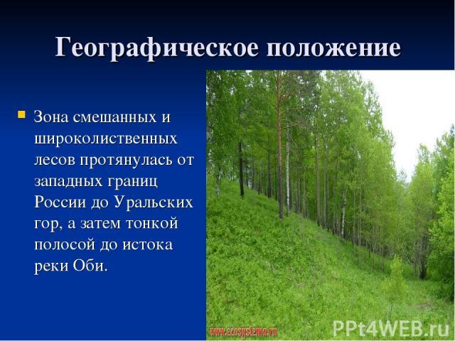 Географическое положение Зона смешанных и широколиственных лесов протянулась от западных границ России до Уральских гор, а затем тонкой полосой до истока реки Оби.