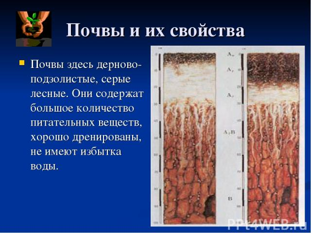 Почвы и их свойства Почвы здесь дерново- подзолистые, серые лесные. Они содержат большое количество питательных веществ, хорошо дренированы, не имеют избытка воды.