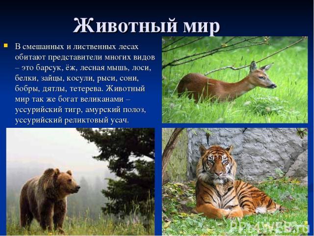 Животный мир В смешанных и лиственных лесах обитают представители многих видов – это барсук, ёж, лесная мышь, лоси, белки, зайцы, косули, рыси, сони, бобры, дятлы, тетерева. Животный мир так же богат великанами – уссурийский тигр, амурский полоз, ус…