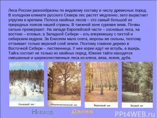Леса России разнообразны по видовому составу и числу древесных пород. В холодном