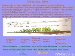 Почвы зоны лесов. Почва – это особое природное тело. Она образуется в результате