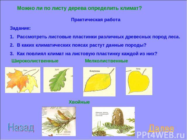 Можно ли по листу дерева определить климат? Практическая работа Задание: Рассмотреть листовые пластинки различных древесных пород леса. В каких климатических поясах растут данные породы? Как повлиял климат на листовую пластинку каждой из них? Широко…
