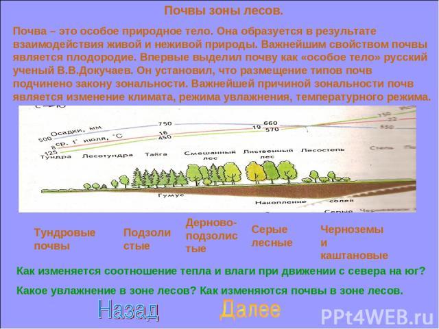 Почвы зоны лесов. Почва – это особое природное тело. Она образуется в результате взаимодействия живой и неживой природы. Важнейшим свойством почвы является плодородие. Впервые выделил почву как «особое тело» русский ученый В.В.Докучаев. Он установил…