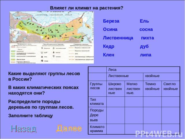 Влияет ли климат на растения? Какие выделяют группы лесов в России? В каких климатических поясах находятся они? Распределите породы деревьев по группам лесов. Заполните таблицу Береза Ель Осина сосна Лиственница пихта Кедр дуб Клен липа Леса Листвен…