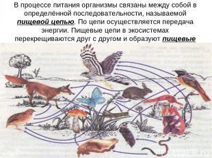 В процессе питания организмы связаны между собой в определённой последовательнос