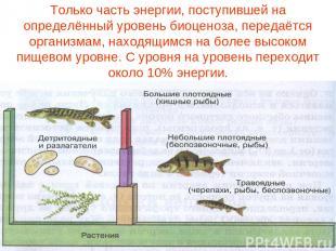 Только часть энергии, поступившей на определённый уровень биоценоза, передаётся
