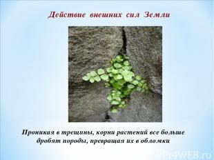 Проникая в трещины, корни растений все больше дробят породы, превращая их в обло