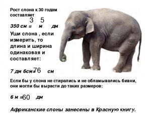 Рост слона к 30 годам составляет 350 см = м дм Уши слона , если измерить, то дли