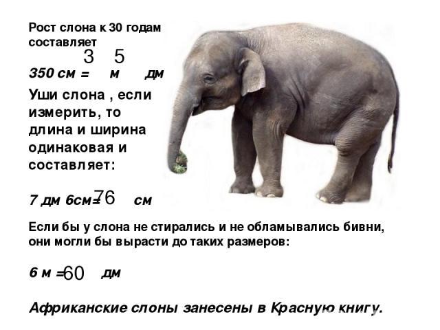 Рост слона к 30 годам составляет 350 см = м дм Уши слона , если измерить, то длина и ширина одинаковая и составляет: 7 дм 6см= см Если бы у слона не стирались и не обламывались бивни, они могли бы вырасти до таких размеров: 6 м = дм Африканские слон…
