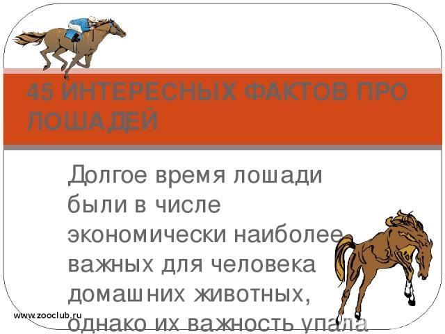 Долгое время лошади были в числе экономически наиболее важных для человека домашних животных, однако их важность упала в связи с развитием механизации. 45 ИНТЕРЕСНЫХ ФАКТОВ ПРО ЛОШАДЕЙ www.zooclub.ru http://zooclub.ru/fakty/o_loshadyah.shtml