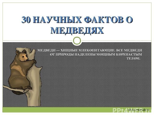 МЕДВЕДИ — ХИЩНЫЕ МЛЕКОПИТАЮЩИЕ. ВСЕ МЕДВЕДИ ОТ ПРИРОДЫ НАДЕЛЕНЫ МОЩНЫМ КОРЕНАСТЫМ ТЕЛОМ. 30 НАУЧНЫХ ФАКТОВ О МЕДВЕДЯХ www.zooclub.ru