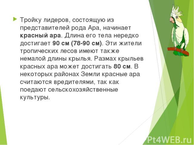 Тройку лидеров, состоящую из представителей рода Ара, начинает красный ара. Длина его тела нередко достигает 90 см (78-90 см). Эти жители тропических лесов имеют также немалой длины крылья. Размах крыльев красных ара может достигать 80 см. В некотор…