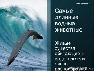 Самые длинные водные животные Живые существа, обитающие в воде, очень и очень ра