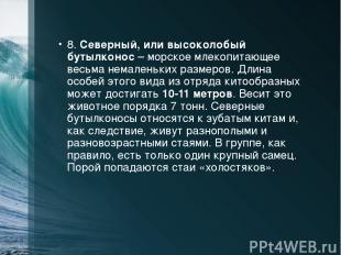8. Северный, или высоколобый бутылконос – морское млекопитающее весьма немаленьк