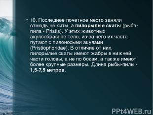 10. Последнее почетное место заняли отнюдь не киты, а пилорылые скаты (рыба-пила