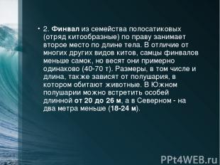 2. Финвал из семейства полосатиковых (отряд китообразные) по праву занимает втор