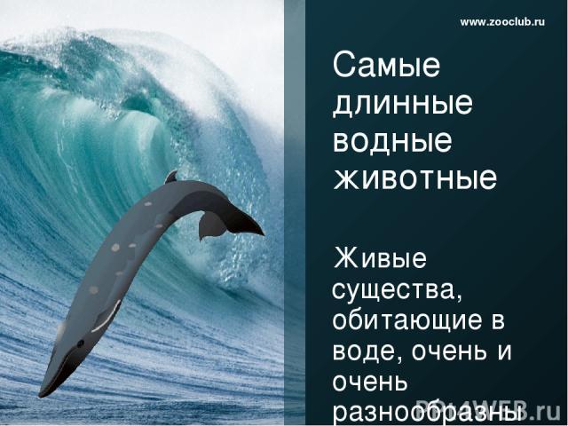 Самые длинные водные животные Живые существа, обитающие в воде, очень и очень разнообразны по форме, размерам, образу жизни, способу питания и многим другим критериям. Длина тела – один из показателей, отличающий обитателей морей и океанов друг от д…