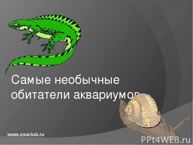 Самые необычные обитатели аквариумов www.zooclub.ru http://zooclub.ru/samye/neobychnye_obitateli_akvariumov.shtml