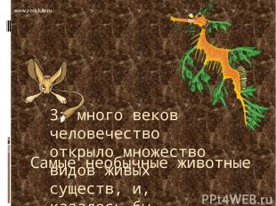 Самые необычные животные За много веков человечество открыло множество видов жив
