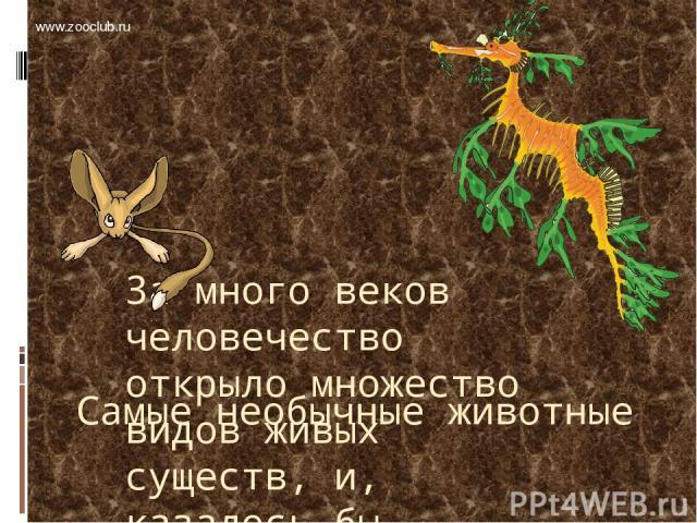Самые необычные животные За много веков человечество открыло множество видов живых существ, и, казалось бы, животный мир уже ничем не может удивить искушенного человека. Но все еще находятся животные, способные поражать воображение причудливостью и …