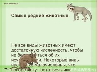 Самые редкие животные Не все виды животных имеют достаточную численность, чтобы