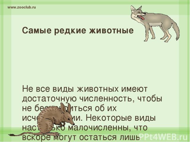 Самые редкие животные Не все виды животных имеют достаточную численность, чтобы не беспокоиться об их исчезновении. Некоторые виды настолько малочисленны, что вскоре могут остаться лишь воспоминанием или чучелами их представителей в музее, как Одино…