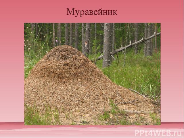 Муравейник