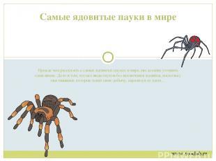 Прежде чем рассказать о самых ядовитых пауках в мире, мы должны уточнить один ню