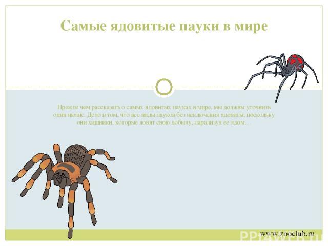 Прежде чем рассказать о самых ядовитых пауках в мире, мы должны уточнить один нюанс. Дело в том, что все виды пауков без исключения ядовиты, поскольку они хищники, которые ловят свою добычу, парализуя ее ядом… Самые ядовитые пауки в мире www.zooclub…