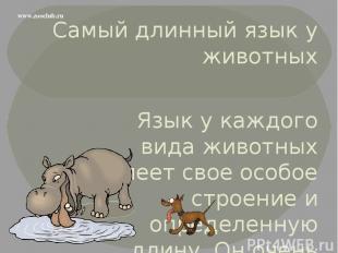 Самый длинный язык у животных Язык у каждого вида животных имеет свое особое стр