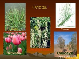 Флора Тюльпаны Саксаул Селин Цитварная полынь Осока