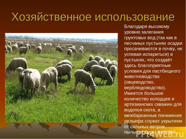 Хозяйственное использование Благодаря высокому уровню залегания грунтовых вод (так как в песчаных пустынях осадки просачиваются в почву, не успевая испариться) в пустынях, что создаёт здесь благоприятные условия для пастбищного животноводства (овцев…