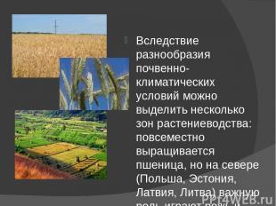 Вследствие разнообразия почвенно-климатических условий можно выделить несколько