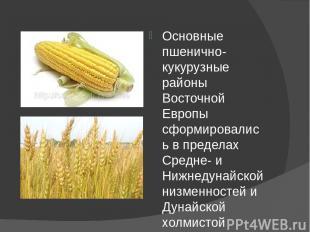 Основные пшенично-кукурузные районы Восточной Европы сформировались в пределах С