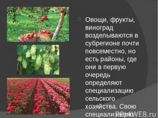 Овощи, фрукты, виноград возделываются в субрегионе почти повсеместно, но есть ра
