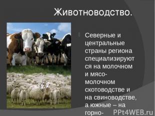 Животноводство. Северные и центральные страны региона специализируются на молочн
