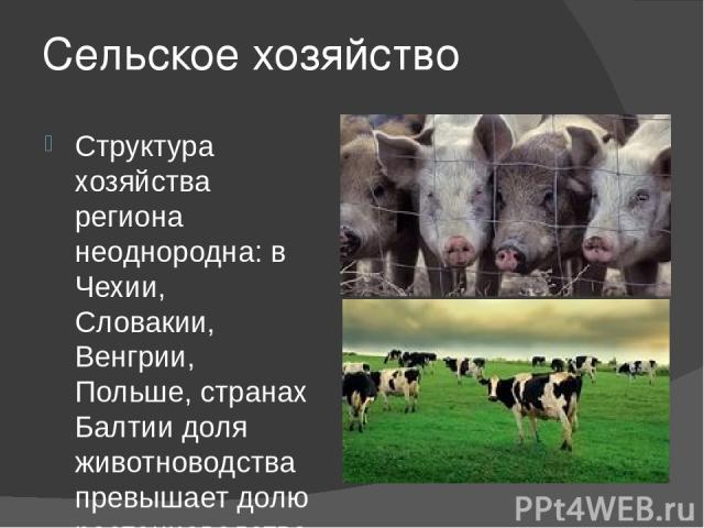 Сельское хозяйство Структура хозяйства региона неоднородна: в Чехии, Словакии, Венгрии, Польше, странах Балтии доля животноводства превышает долю растениеводства, в остальных - соотношение пока обратное.