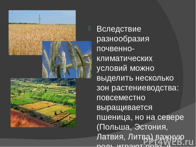 Вследствие разнообразия почвенно-климатических условий можно выделить несколько зон растениеводства: повсеместно выращивается пшеница, но на севере (Польша, Эстония, Латвия, Литва) важную роль играют рожь и картофель, в центральной части субрегиона …