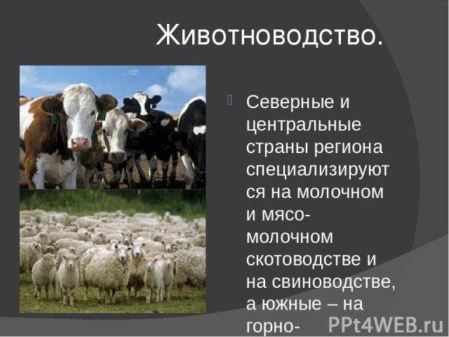 Животноводство. Северные и центральные страны региона специализируются на молочном и мясо-молочном скотоводстве и на свиноводстве, а южные – на горно-пастбищном мясном и шерстяном животноводстве