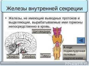 Железы внутренней секреции Железы, не имеющие выводных протоков и выделяющие, вы