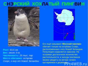 СНЭРСКИЙ ХОХЛАТЫЙ ПИНГВИН Рост: 63,5 см. Вес: около 3 кг. Численность: 25 тыс. п