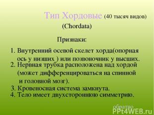 Тип Хордовые (Chordata) 4. Тело имеет двухстороннюю симметрию. (40 тысяч видов)