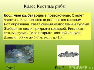 Класс Костные рыбы Костные рыбы водные позвоночные. Скелет частично или полность