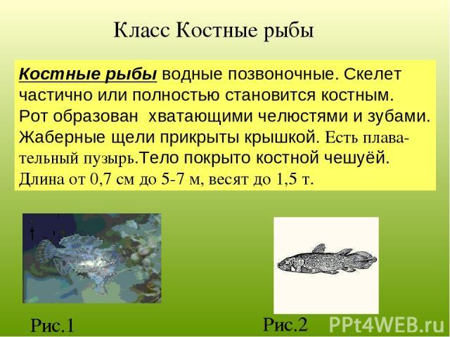 Класс Костные рыбы Костные рыбы водные позвоночные. Скелет частично или полностью становится костным. Рот образован хватающими челюстями и зубами. Жаберные щели прикрыты крышкой. Есть плава- тельный пузырь.Тело покрыто костной чешуёй. Длина от 0,7 с…