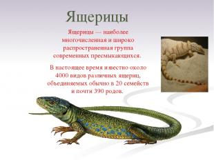 Ящерицы Ящерицы — наиболее многочисленная и широко распространенная группа совре