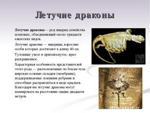 Летучие драконы Летучие драконы— род ящериц семейства агамовых, объединяющий око