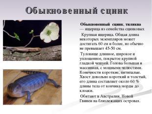 Обыкновенный сцинк Обыкновенный сцинк, тиликва — ящерица из семейства сцинковых